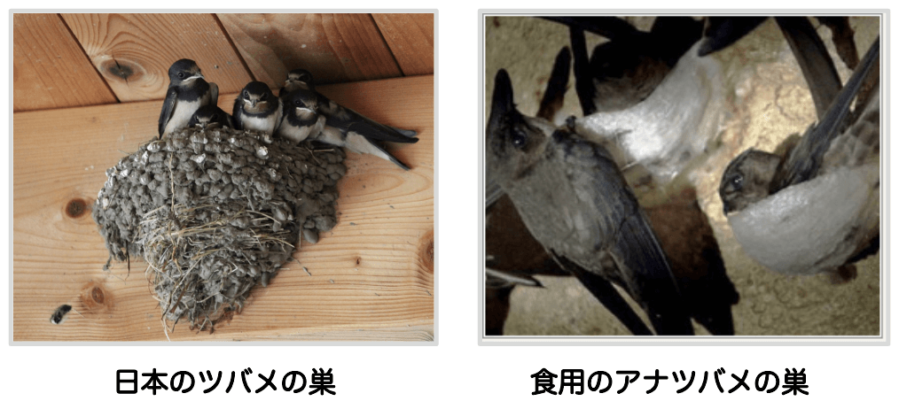 食用のツバメの巣の比較