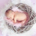 赤ちゃんの免疫力を高めるツバメの巣